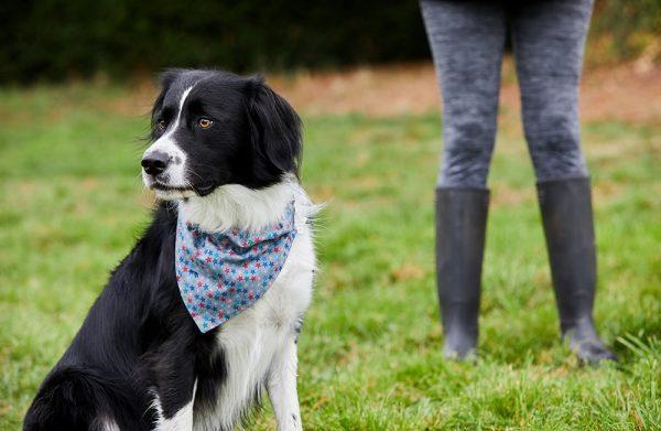 Stardust handmade dog bandana Sprollie
