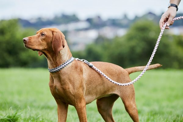 Paracord dog collar and lead