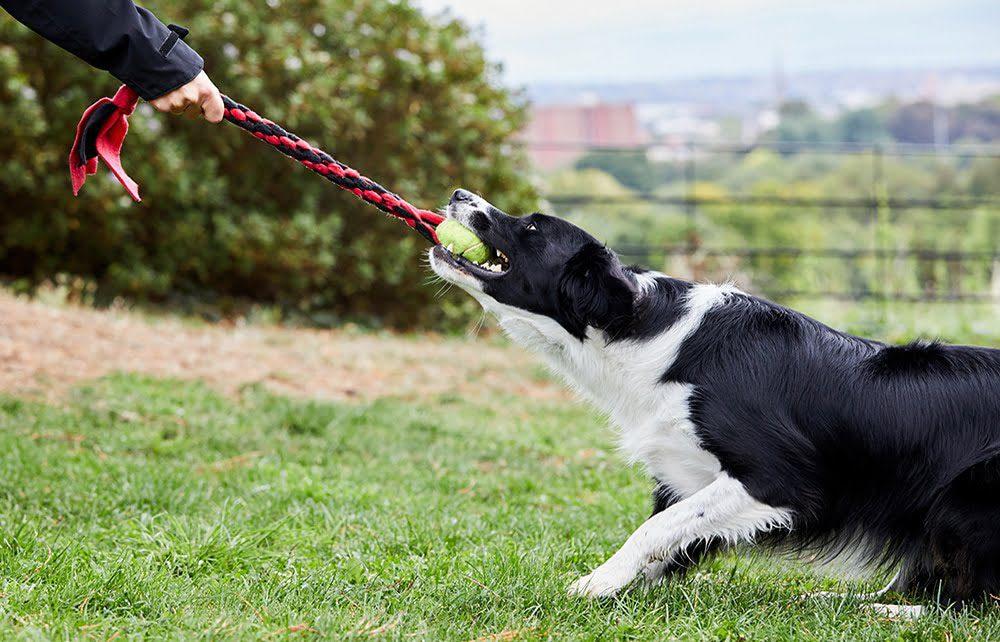 dog tug toy with tennis ball