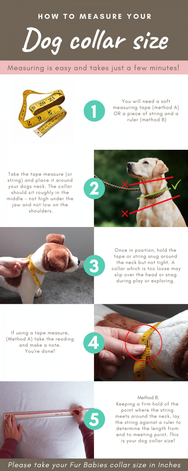 how to measure your dogs collar size