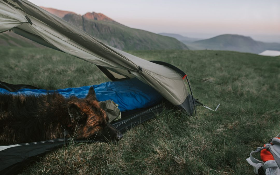 Hiking and camping essentials for dog adventures