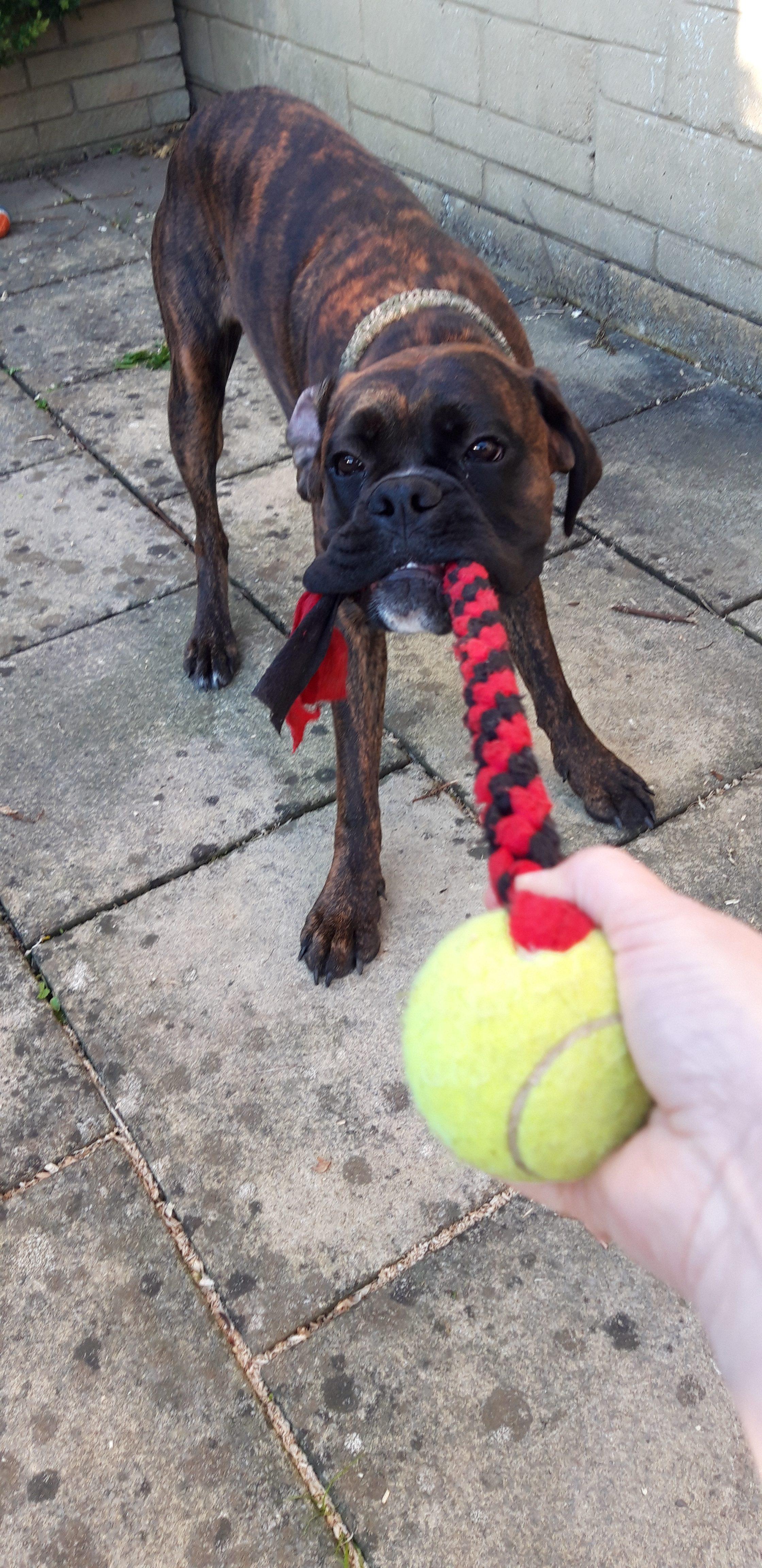 fleece dog tug toy
